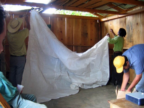 Preparation of a cloth for the screening of a film in the site of a rural organisation