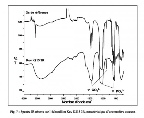 Figure 7 : Spectre IR obtenu sur l'échantillon Kov K215 3R, caractéristique d'une matière osseuse.Figure 7: Infrared spectrum obtained on the sample Kov K215 3R, characteristic of bone material.