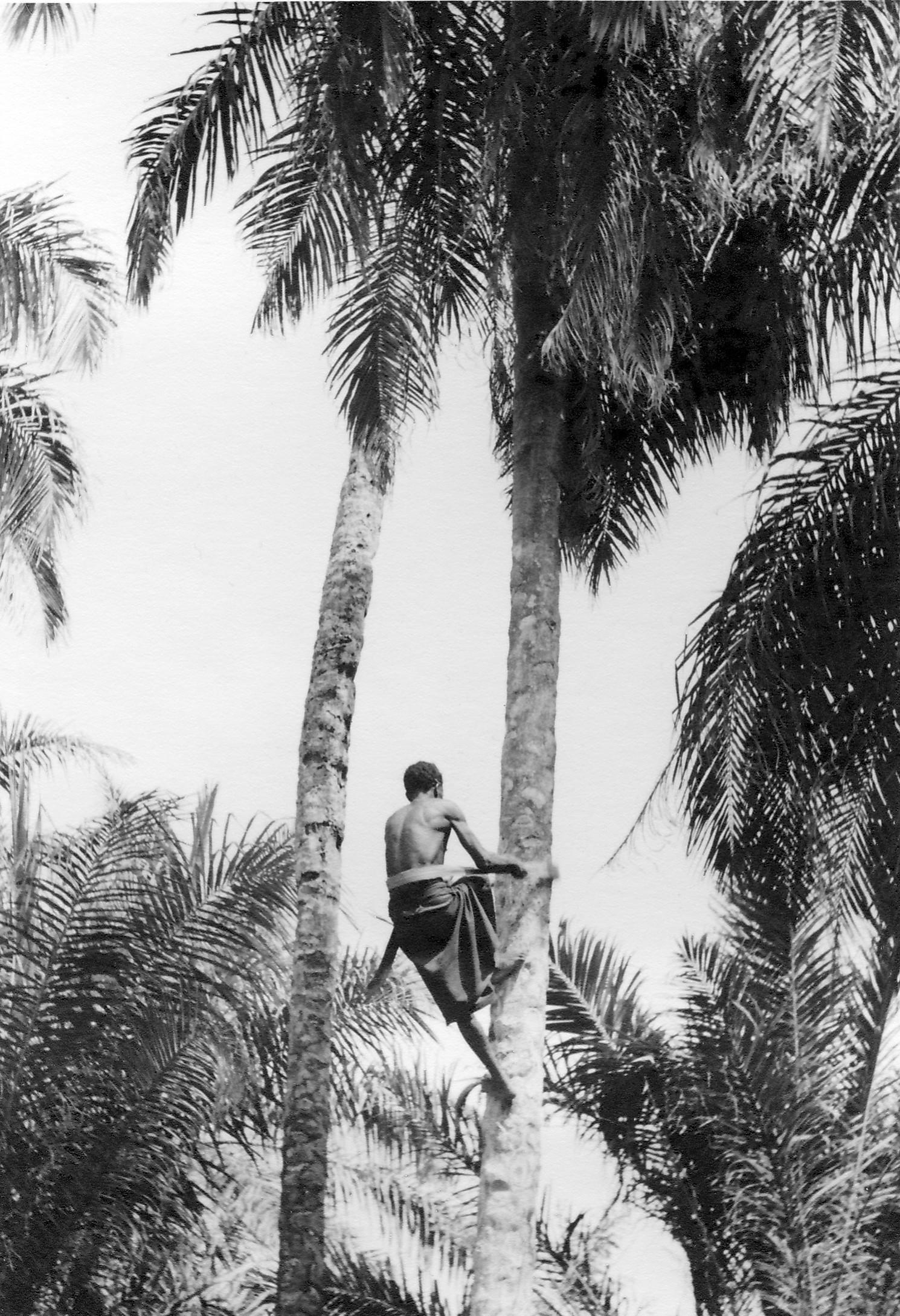 palmier malais 6 lettres