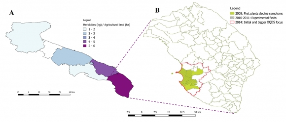 The olive quick decline syndrome OQDS diffusion in Apulia Region