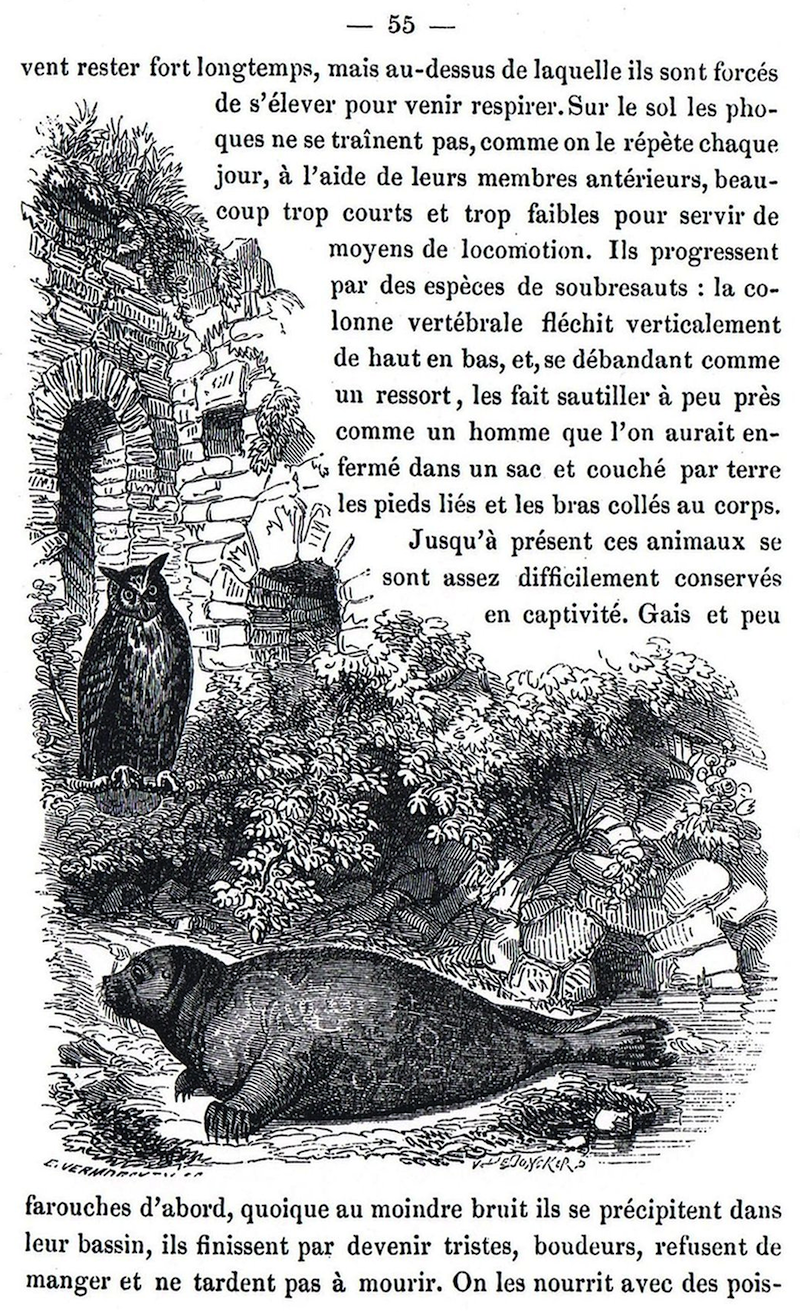 The Brussels Zoo A Mirror Of 19th Century Modes Of