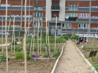 Jardin partagé en pied d'immeuble dans un quartier de la rénovation urbaine, Le Sanitas, Tours, avril 2012