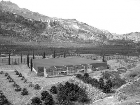 Picture 2. The coffee nursery at Qā' al‑Ḥajjar (2,150 m a.s.l.).