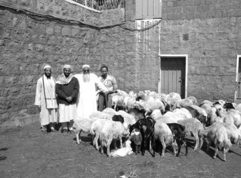 Picture 3. The animal husbandry facility at al‑Ḥuṭayb