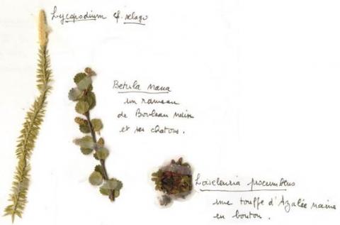 Bee BOMBES UK Native fleurs fait main lot de 5