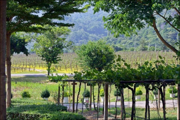 Wines without Latitude: Global and local forces and the