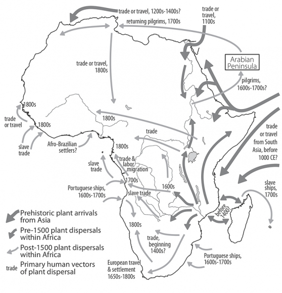 A brief agricultural history of cannabis in Africa, from ... on