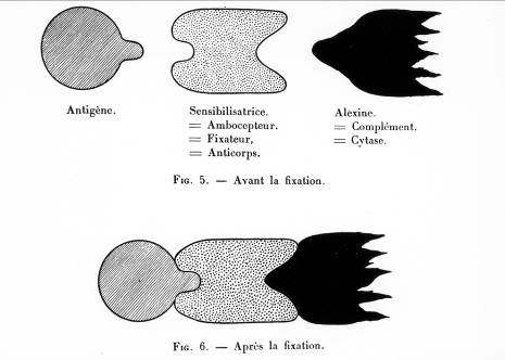 Figure 3 Le devenir des dessins pde Paul Ehrlich