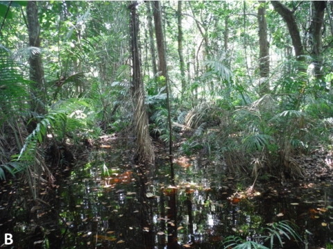 Figure 5B: Inundated forest