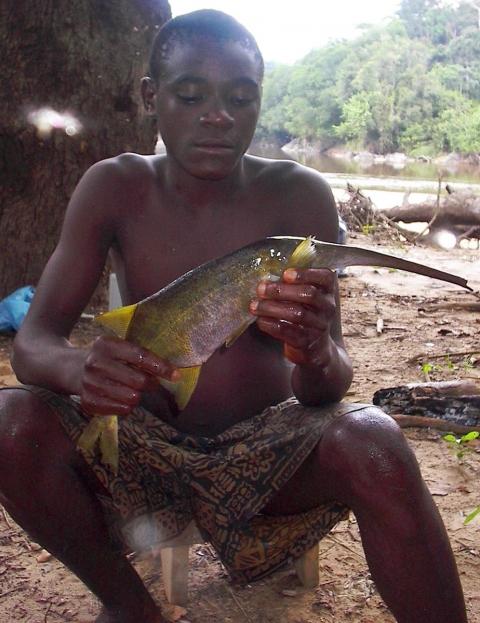 Ethnoecology and ethnomedicinal use of fish among the Bakwele of