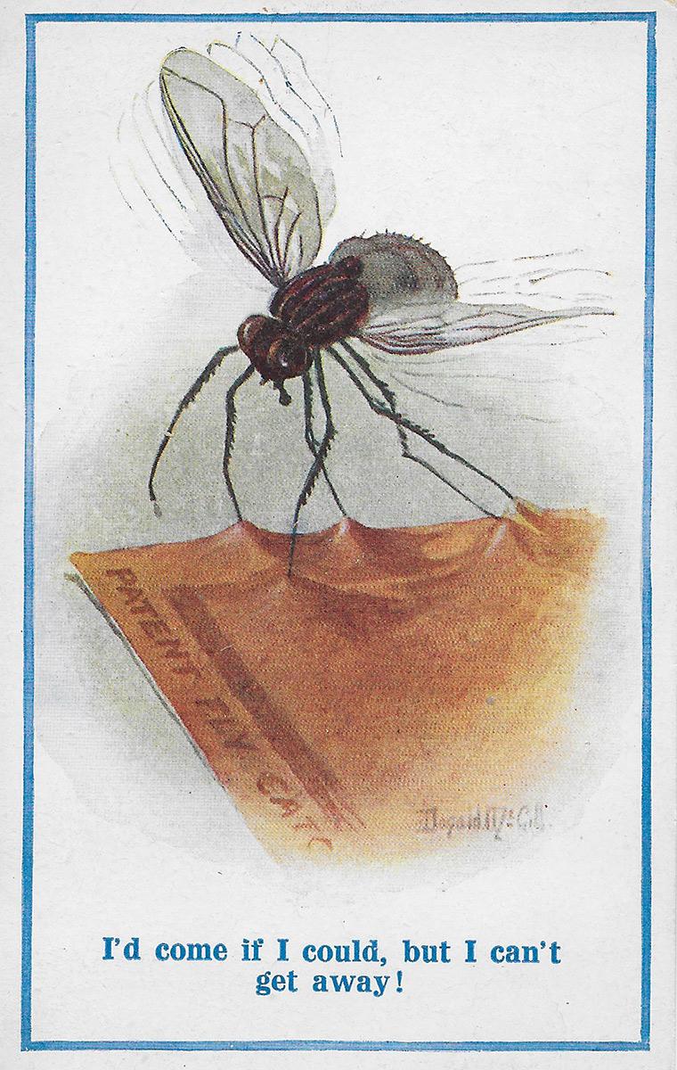 Comment Se Débarrasser De Moucherons Naturellement on n'attrape pas les mouches avec du vinaigre