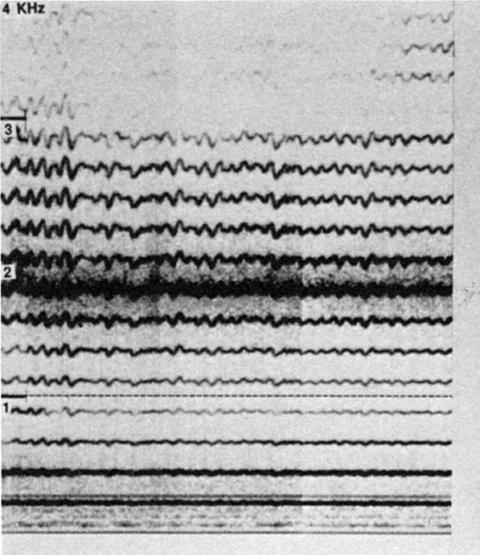 Fig. 35: Essai par Trân Quang Hai.