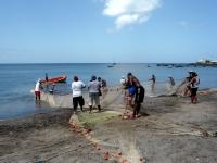 Scène de pêche traditionnelle à la senne (Martinique)
