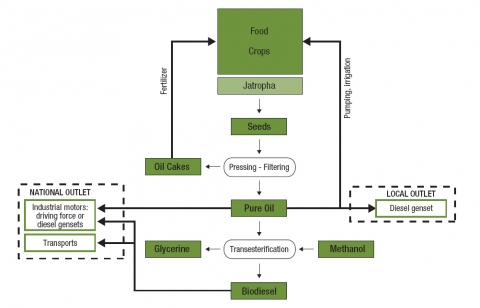Figure 2. The farm-based jatropha biofuel supply chain.