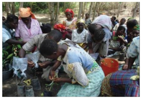 Figure 3. Women being trained in tree management