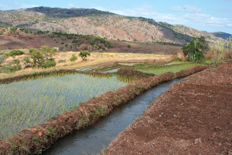Water sharing and deforestation in the watershed