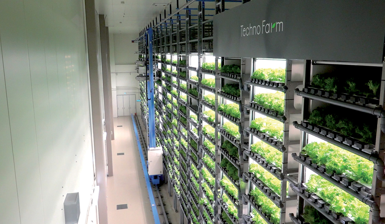 Vertical Farms  Building A Viable Indoor Farming Model For