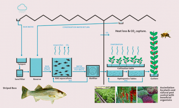 Aquaponics: a positive impact circular economy approach TO feeding cities