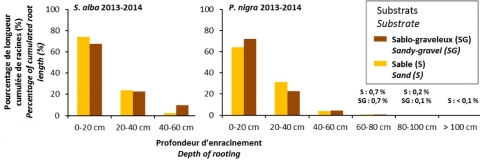 Fig. 4 – Répartition du pourcentage des longueurs cumulées de racines en fonction de la profondeur pour les semis 2013-2014 (P. nigra et S. alba).Fig. 4 – Percentage distribution of cumulated root systems length as a function of depth for 2013-2014 seedlings (P. nigra and S. alba).