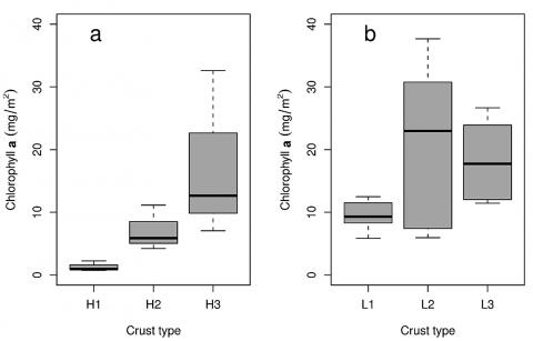 Fig. 10 – Boxplot of Chlorophyll A contents of the crusts at Hühnerwasser (A) and Neuer Lugteich (B).Fig. 10 – Teneurs en chlorophylle A des croûtes cryptogamiques à Hühnerwasser (A) et à Neuer Lugteich (B).