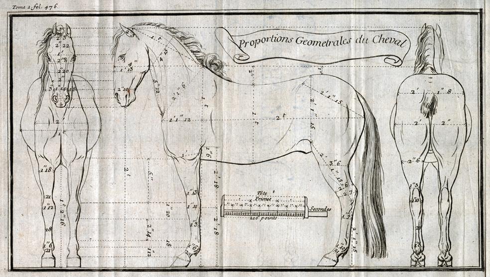 L\'anatomie du cheval aux XVIIIe et XIXe siècles : un outil pour ...