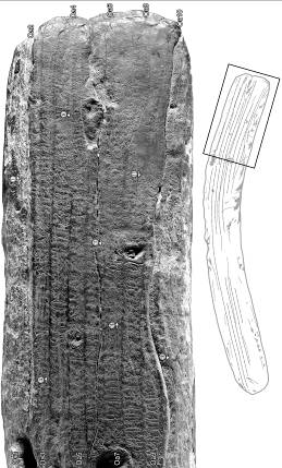 Figure 4. – A section of Berlin rongorongo tablet, Inv. VI4878