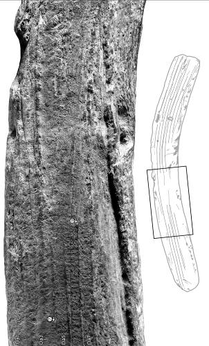 Figure 6. – A section of Berlin rongorongo tablet, Inv. VI4878