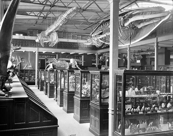 Venomous Snake Skeleton Display