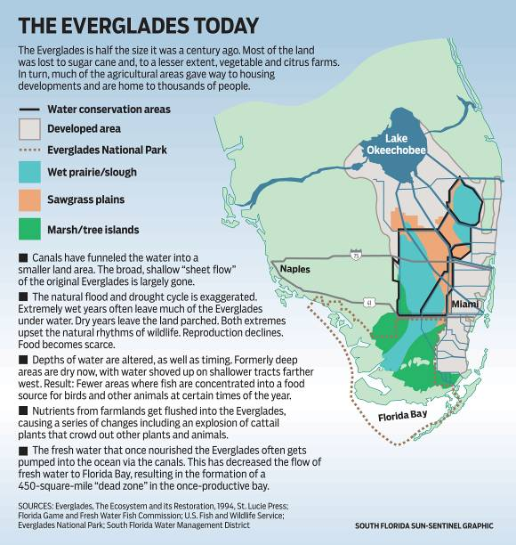 The Everglades Ecosystem Under Protection Or Under Threat