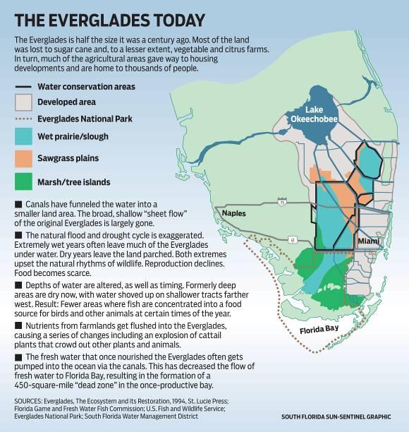 Ecosystems: Mangrove