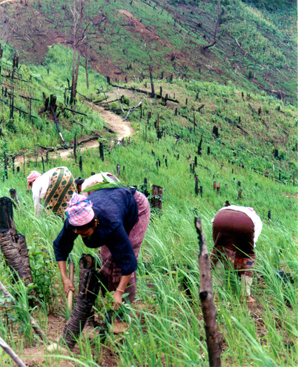 Is The Diversity Of Shifting Cultivation Held In High