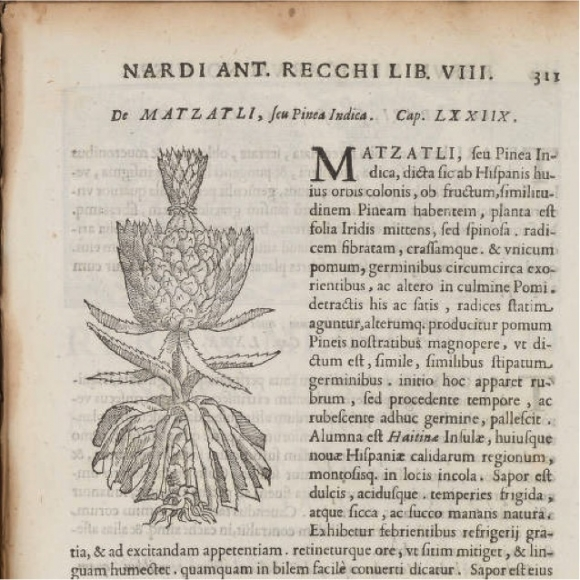 Una Fruta Real Sobre Un Encuentro Europeo Con El Ananá