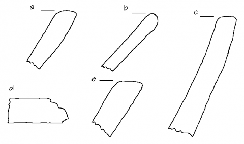 Fig. 14. Site 211, artifacts
