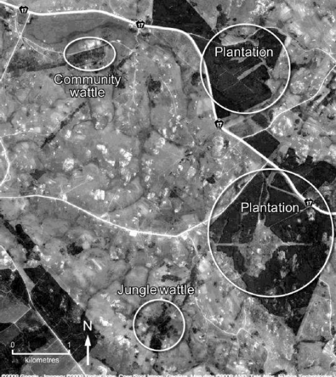 Figure 3: Satellite image of study area highlighting different kinds of wattle stands: community wattle, plantations and 'jungle' clumps.