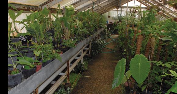 Le jardin botanique de lyon d un service technique un for Conception jardin lyon