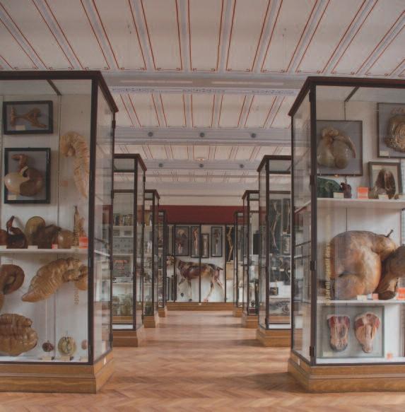 La rénovation du musée de l'École nationale vétérinaire de Maisons Alfort