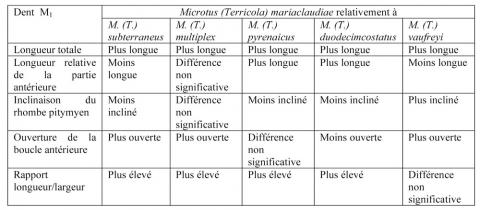 Tableau 2 - Résumé des différences odontométriques observées entre Microtus (Terricola) mariaclaudiae et M. (T.) subterraneus, M. (T.) multiplex, M. (T.) pyrenaicus, M. (T.) duodecimcostatus et M. (T.) vaufreyi.Table 2 - Summary of odontometric differences observed between Microtus (Terricola) mariaclaudiae and M. (T.) subterraneus, M. (T.) multiplex, M. (T.) pyrenaicus, M. (T.) duodecimcostatus and M. (T.) vaufreyi.