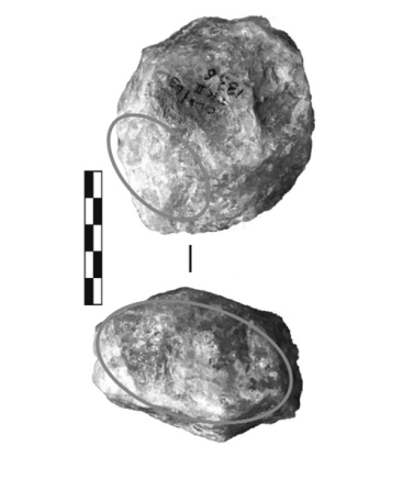 Figure 5 - Example of a typical hammerstone with fracture angles from TK Upper Floor. Circles indicate battering areasFigure 5 - Exemple d'un percuteur avec angles de fractures typique du site TK Upper Floor. Les cercles indiquent des zones percutées
