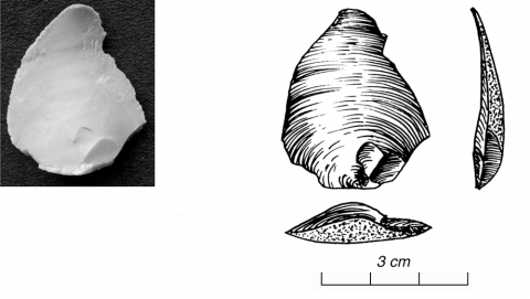 Figure 8 - Morphologie du bulbe 1 : positif (photo G. Gratton) (*)Figure 8 - Bulbar morphology 1: positive (picture by G. Gratton)
