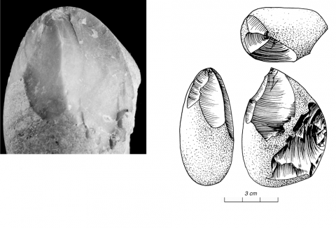 Figure 9 - Morphologie du bulbe 2: dièdre (positif angulaire) (photo P. Chisté, Università di Trento)Figure 9 - Bulbar morphology 2: dihedral (angular positive) (picture by P. Chisté, Università di Trento)