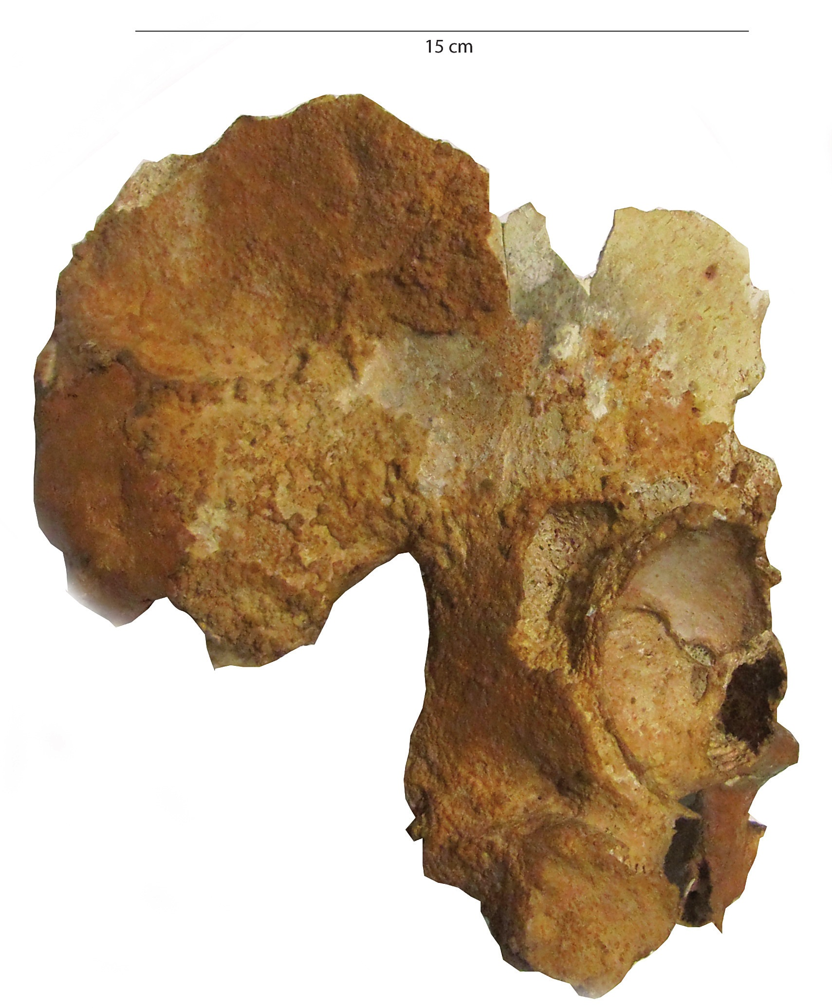 An Early Gravettian Cultural Attribution For The Human Fossils From Fossil Rg Url Http Paleo Docannexe Image 2859 Img 3