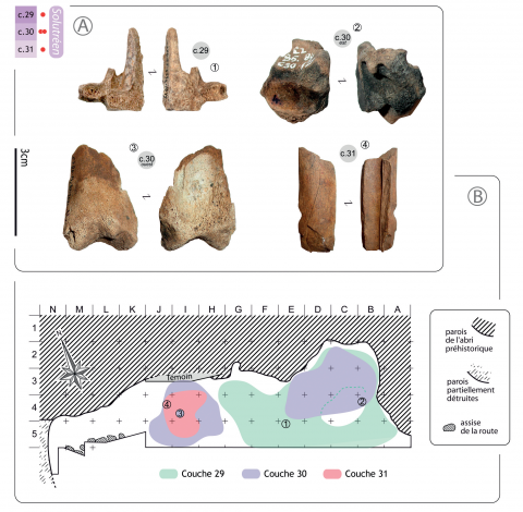 Figure 4 - Nature and location of the samples chosen for AMS dating in the Solutrean sequence (n° 1: reindeer metatarsal; n° 2: burnt reindeer distal tibia epiphysis; n° 3: distal shaft from a juvenile medium-sized ungulate; n° 2 and 4: photos J.-C. Castel).