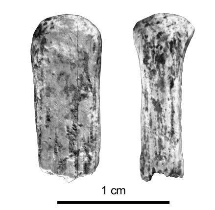 Figure 11 - Unfinished basked-shaped bead from the Early Aurignacian assemblage of Les Abeilles © Musée National de Préhistoire.