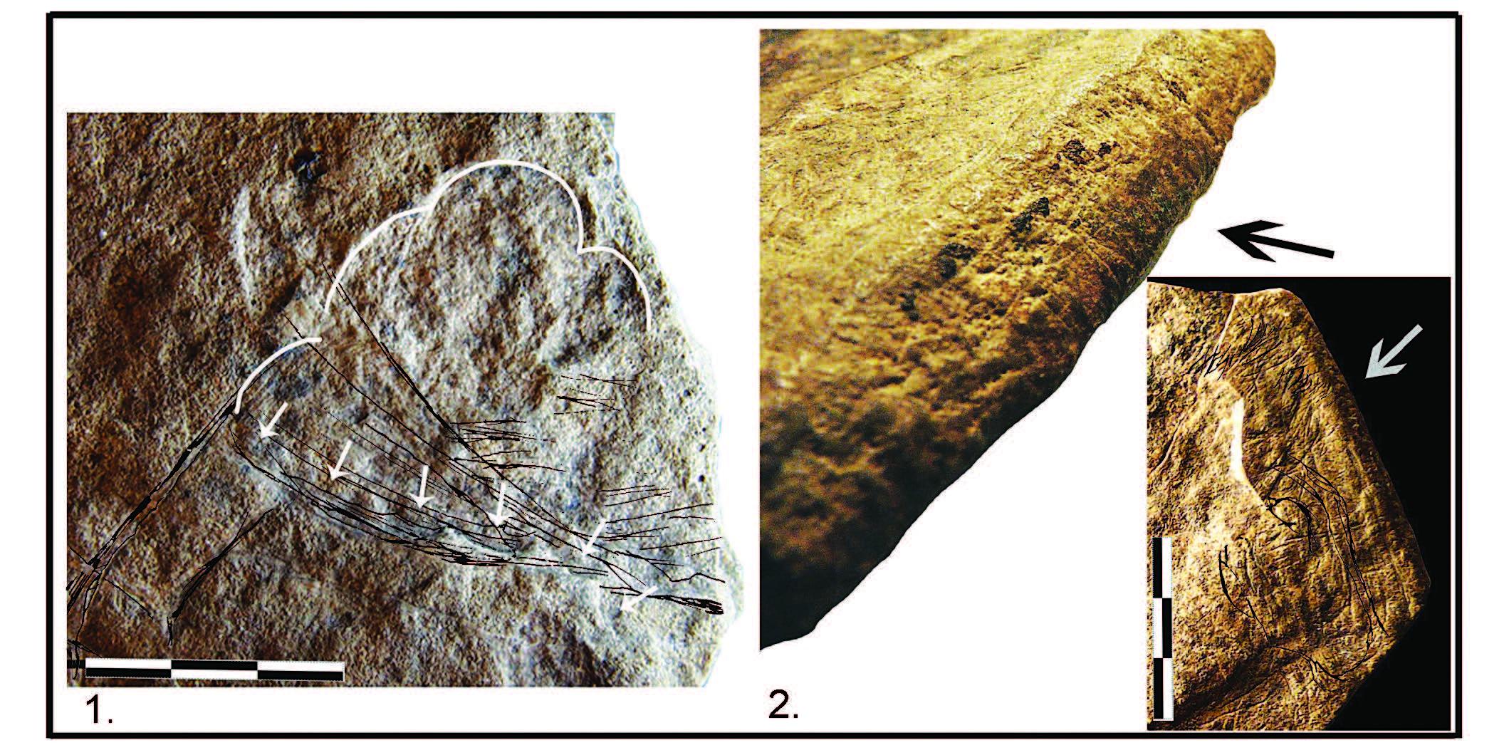 Datation de fossiles prélevés dans des grottes sur des îles le long