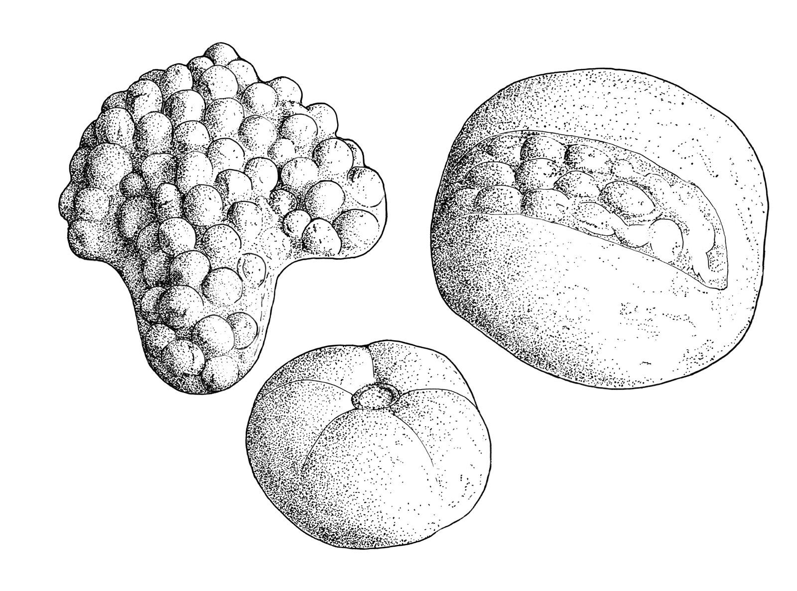 Death gender and sea shells in carthage agrandir biocorpaavc Choice Image