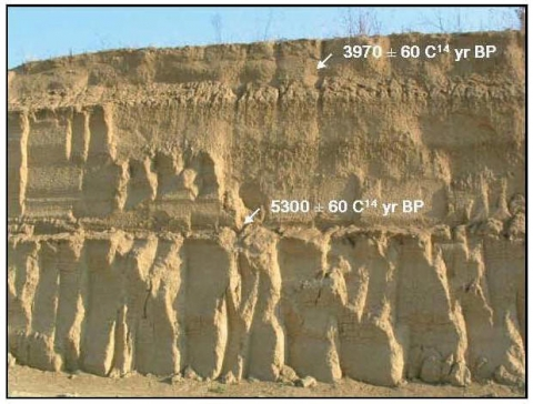Photo 1 - Early-Middle Holocene alluvial sands (lower Chienti River)