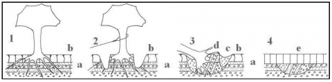 Figure 3 - Possible sequence of events responsible for the sedimentary setting of the hollows