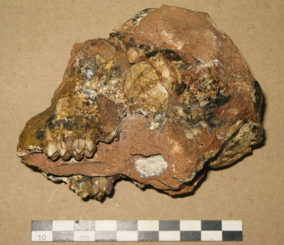 ce qu'on entend par datation fossile Caroline du Nord âge datant lois