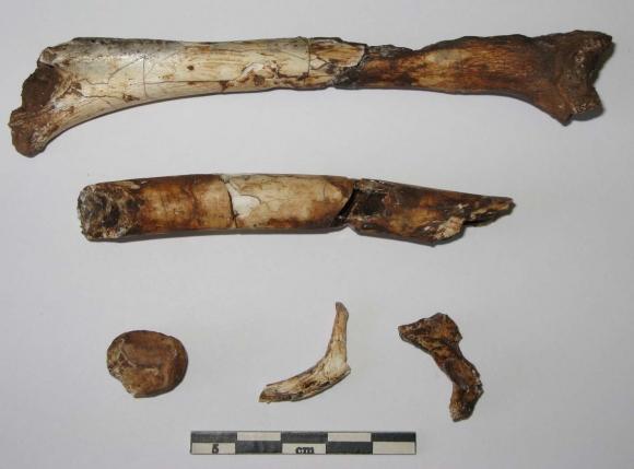 ce qu'on entend par datation fossile sites de rencontres en Lettonie