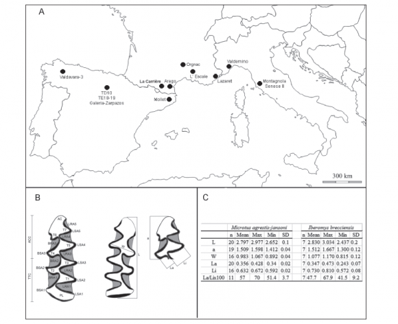 Biochronological Data For The Middle Pleistocene Site Of